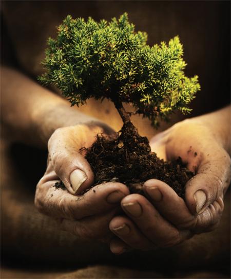 ecology based education 1 spp
